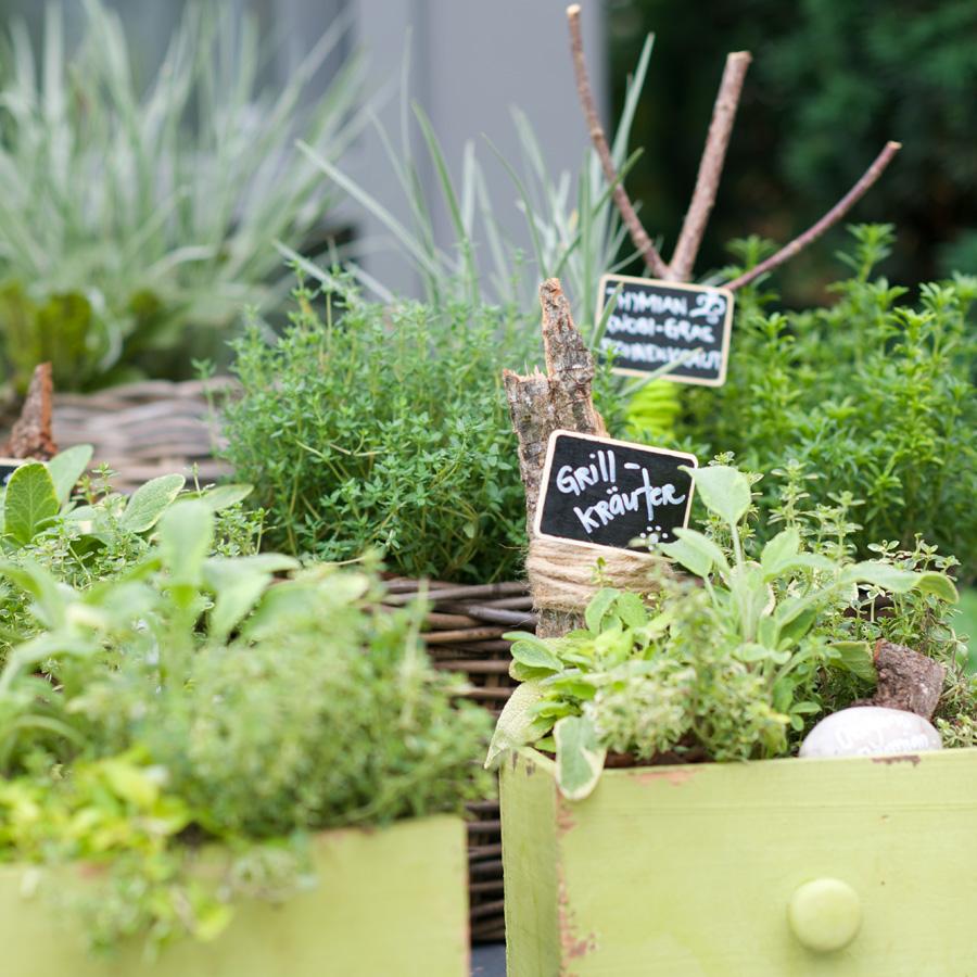 Gutes aus dem eigenen Garten - Garten-Center Meier